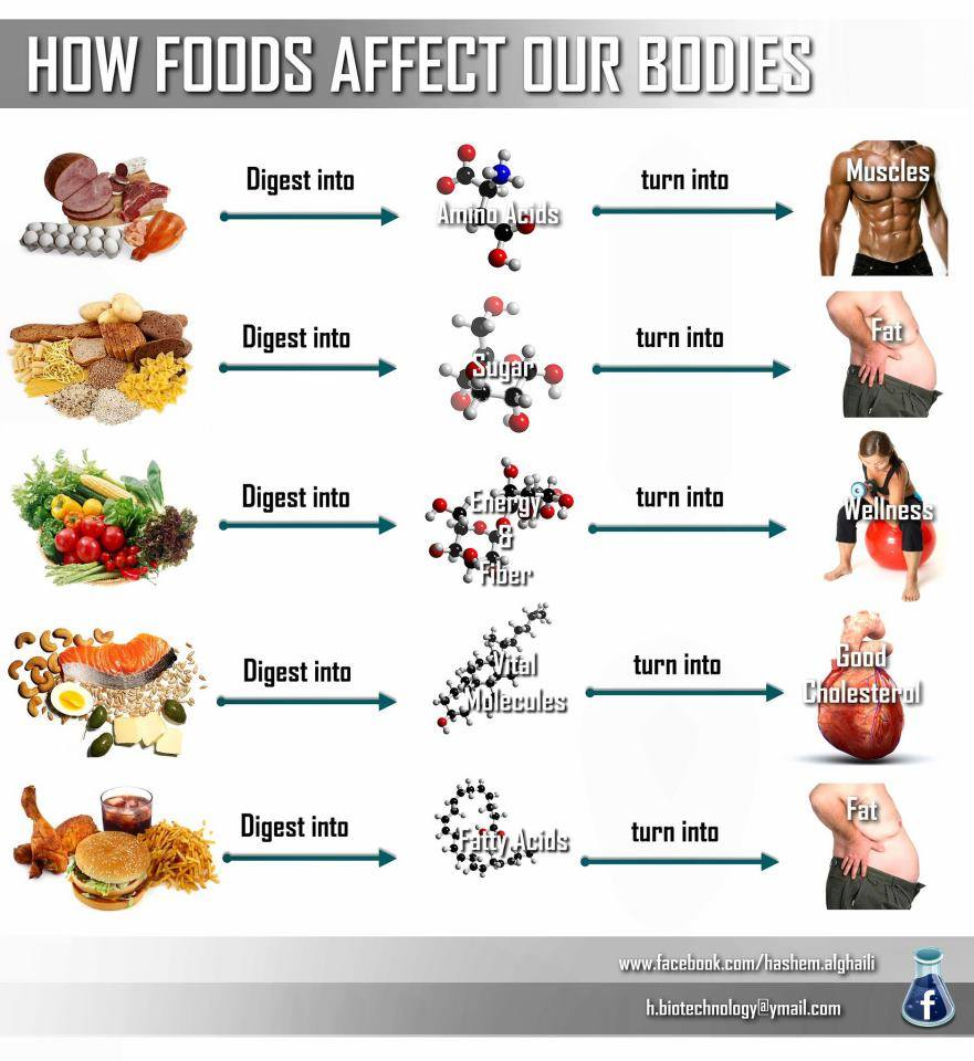 How Foods Affect Our Body